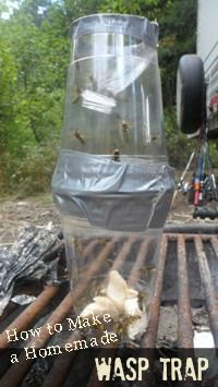 How to make an effective DIY wasp trap with plastic drinking cups, a water bottle, and duck tape. Made these the last time we went camping and it really WORKS!!