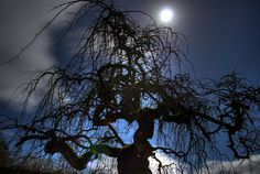 Google Image Result for http://www.lostatseaphotography.com/mephotos/weeping-willow-tree-2-1280.jpg
