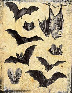 bats, vintage print, drawing, Halloween decor