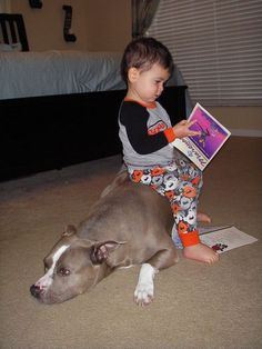 "See? Pit bulls are not vicious, they were originally bred as ""nanny dogs"" to take care of children."