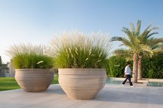Atelier Vierkant large-scale versions of its UF model planters in white, which were planted with ornamental grasses.