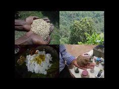 Medicinal Rice B4 Formulations for Rochelia Allergy: Pankaj Oudhia's Med...