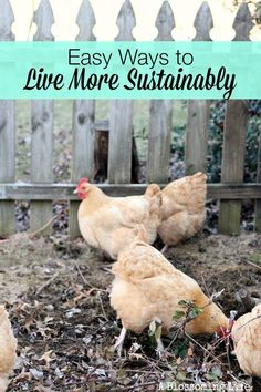 Easy Ways Live More Sustainably Want to live a more sustainably but don't know where to start? Here are some great and easy ways to live more sustainably! Living Off The Land, Living At Home, Frugal Living, Future Farms, Farms Living, Homestead Living, Chickens Backyard, Backyard Farming, Hobby Farms