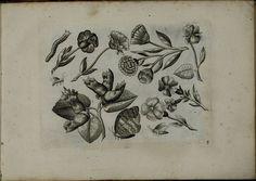 Viridarium Novum b | par peacay