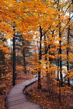 Autumn boardwalk by Carolene.