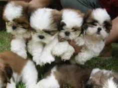 bellos cachorros!!!
