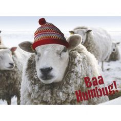 Baa Humbug An amusing take on the catchphrase used by Ebenezer Scrooge, the principal character from Charles Dickens' 1843 novel, 'A Christmas Carol'. The phrase' bah humbug' is often used to express disgust with many of the modern Christmas traditions! Funny Christmas Cards, Very Merry Christmas, Modern Christmas, Christmas Carol, Christmas Humor, Christmas Time, Xmas, Ebenezer Scrooge, Interesting Animals