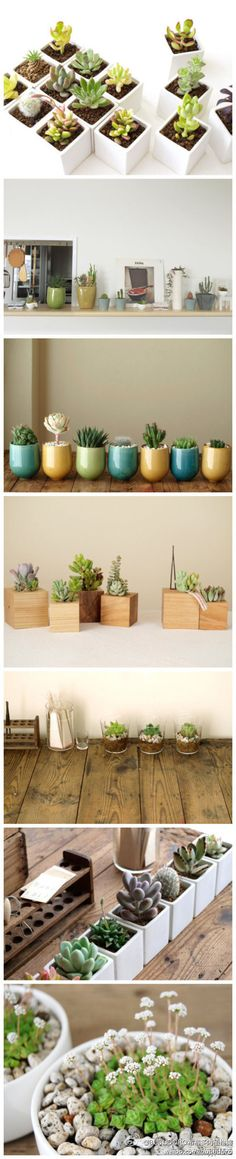 cute planters for the kitchen