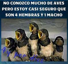 Ornitología Rápida! Imagenes de risa 2016 Mega Memeces Más en I➨ http://www.megamemeces.com/memeces/imagenes-de-risa-2016