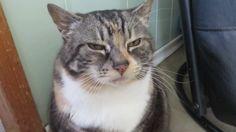 Worlds Most Unimpressed Cat https://www.youtube.com/watch?v=-iJH5S85u8w