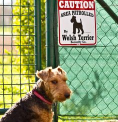 Area Patrolled by Welsh Terrier