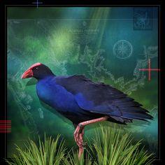Art Print - x Nativity, Bird, Art Prints, Gallery, Artist, Artwork, Pictures, Animals, Art Impressions