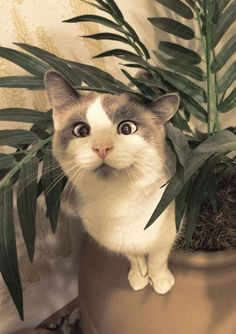 My co-worker's cross-eyed cat I THINK I HAVE EATEN TO MUCH OF THAT FUNNY PLANT IN THE GREEN HOUSE.WHAT WAS IT THEY CALLED IT ??? OHHH YES- WEED OR SOMETHING LIKE THAT.HEEE,HHHHHEEEEEEE,I FEEL GOOOD. MARIA S DAUGBJERG.