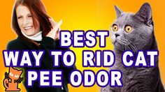Get Rid of Cat Pee Smell: Insider secrets to getting rid of cat urine odor. Cat Urine Remover, Urine Odor, Pet Urine, Odor Remover, Pet Odors, Cat Pee Smell, Cat Urine Smells, Cat Brain, Cat Perch