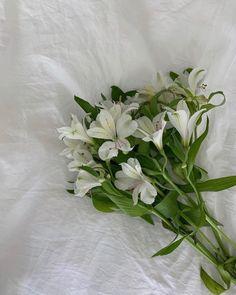 📸: @izzydilg Dark Flowers, Pastel Flowers, Simple Flowers, Summer Flowers, Vintage Flowers, Pretty Flowers, Beautiful Flowers Garden, Beautiful Roses, Feeds Instagram