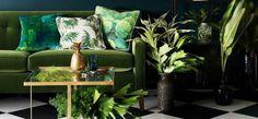 Vetplantjes, cactussen, de moestuin en een heel oerwoud op je balkon. In 2015 werd het groen…
