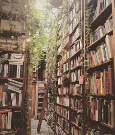 Incredible home library catalog system you'll loveYou can find Dream library and more on our website.Incredible home library catalog system you'll love Room With Plants, Dream Library, Beautiful Library, Home Libraries, Library Home, Library Art, Book Aesthetic, Traditional Decor, Book Nooks