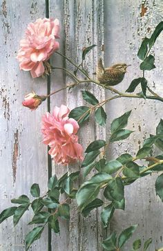 Summer Roses - Winter Wren by Carl Brenders found at Southern Gallery