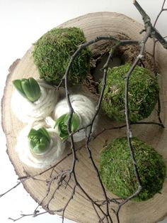 summer plants This impression (spring decorative fireplace awesome especially moss balls for our cam Deco Floral, Arte Floral, Flower Decorations, Christmas Decorations, Christmas Flowers, Christmas Holidays, Spring Bulbs, Ikebana, Christmas Inspiration