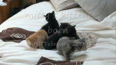 Kittens - New born cute little kittens born February Kittens, Dogs, Animals, Cute Kittens, Animales, Animaux, Doggies, Kitty Cats, Baby Cats