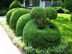Cute idea for bushes! The hungry caterpillar!