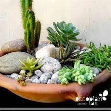Resultado de imagen para jardines diminutos en macetas