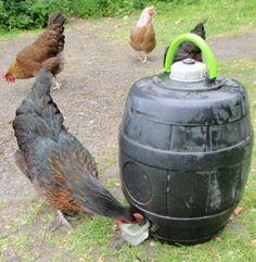 Homemade Chicken Waterer, Pvc Chicken Waterer, Chicken Feeders, Diy Chicken Coop, Chicken Water Feeder, Keeping Chickens, Raising Chickens, Pet Chickens, Chickens Backyard