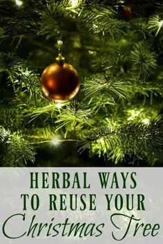 Learn these herbal ways to reuse use your Christmas tree to make remedies, foods, skincare products, and more before you throw it out! #christmastree #remedies #herbal #pine #fir #herbalremedies Home Remedies For Spiders, Cold Home Remedies, Natural Health Remedies, Herbal Remedies, Real Christmas Tree, Christmas Bulbs, Christmas Scents, Homemade Christmas, Xmas Tree