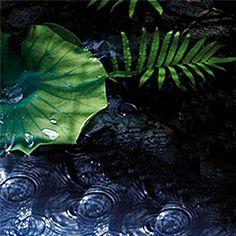 Au coeur de la forêt de bambous entre cascades vertigineuses et plages de sable noir, Pain de Sucre à Bali, un souffle de paradis..