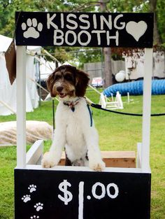 Dog kissing booth. Great fundraiser!