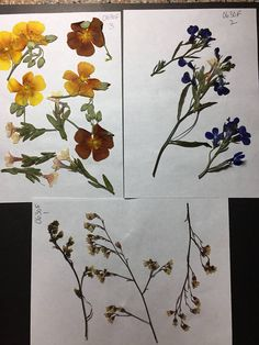 Real Pressed Flowers Card Embellishment Envelope Decoration