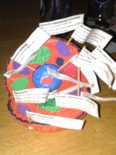 Model cell year 7 homework