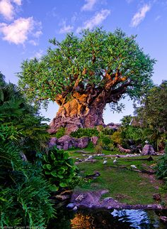 #12 on the NDP Disney Parks Summer Bucket List - Take pictures at all 4 parks icons - Disney's Animal Kingdom, WDW Resort