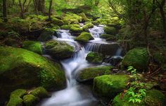 Moss Valley by Jaewoon U on 500px