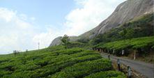 Kerala honeymoon tour packages | Kerala holidays tour packages | Kerala houseboat packages | South India tour packages | Kerala holiday tour packages