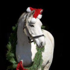 white horse christmas wreath christmas horses christmas animals christmas time country christmas - Christmas Horse
