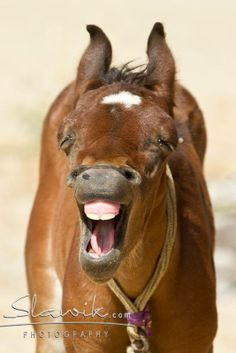-when the girl laughed, she horse laughed...tee hee hee.