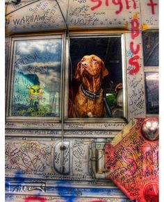 Sign Bus Dog © John Neel