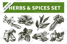 Hand Drawn Sketch Herbs & Spices Set