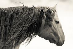 horses beautiful