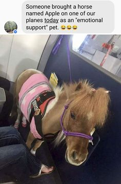 Here are 40 Funny Animal Pictures and Funnies Memes that will surely make up your day. Check out Funny Animal Picture Wackyy Picdump of the Day Tiny Horses, Cute Horses, Beautiful Horses, Beautiful People, Cute Funny Animals, Funny Animal Pictures, Funny Cute, Horse Pictures, Random Pictures
