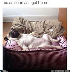 Me as soon as I get home | FUNIGY.com - New Funny Pictures and Hilarious GIFs Everyday!