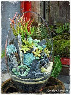Our Little Acre: Northwest Flower & Garden Show: The Container Gardens  Photo by Kylee Baumle