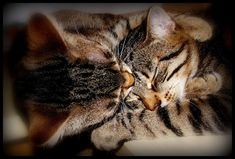 Forehead Kiss Hug | The 25 Most Important Kitten Hugging Techniques