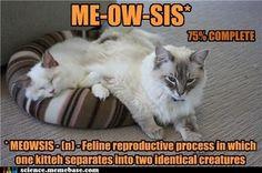 Science jokes with cats. Science Cartoons, Funny Science Jokes, Weird Science, Funny Memes, Science Fun, Memes Humor, Cat Memes, Hilarious, Biology Jokes