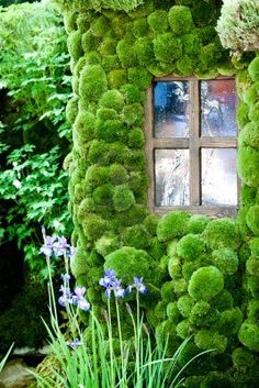 #moss #house . #gardening #shed