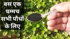 Organic Liquid Fertilizer, Seaweed, The 100, Herbs, Iron, Gardening, Lawn And Garden, Herb, Horticulture