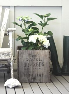 Beach Cottage Therapy, The Shop, Hydrangaeas, & A Shabby Old Adirondack | old box planter