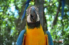 Parque das Aves em Foz do Iguaçu, PR