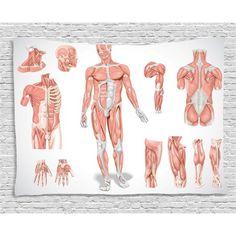 Ambesonne Human Anatomy Graphic Print & Text Semi-Sheer Rod Pocket Curtain Panels (Set of Drapes Curtains, Curtain Panels, Skin Structure, Cell Biology, Muscle Anatomy, Human Anatomy, Rod Pocket, Dorm Decorations, Graphic Prints